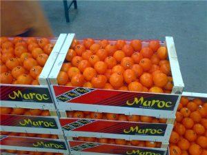 maroc-agrumes-2