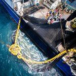 Pêche illégale : La ZEE du Gabon fournit 20 pc des captures mondiales de thon atlantique