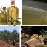 L'ADA et la BID lancent un vaste programme de plantation d'oliviers
