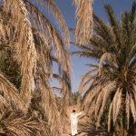 Les oasis au Maroc menacées de disparition par le réchauffement climatique