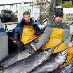 Les quotas de pêche de l'espadon de Méditerranée fixé à 10.500 T à partir de 2017