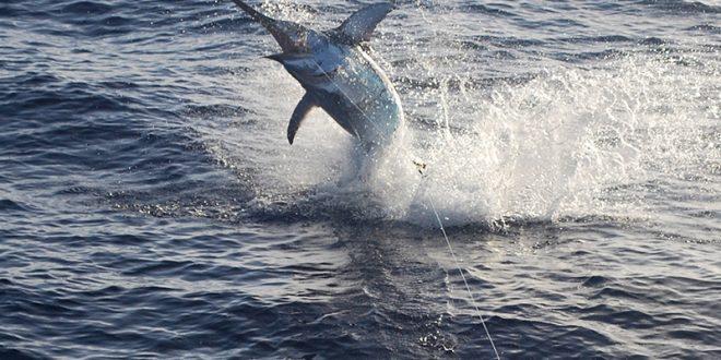 UE: Le Maroc refuse de réduire son quota de pêche de l'espadon