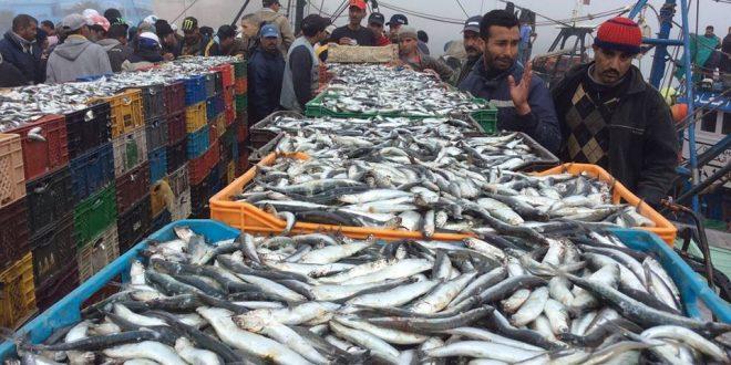 Maroc-Pêche : Les débarquements de la flotte artisanale en hausse à fin novembre
