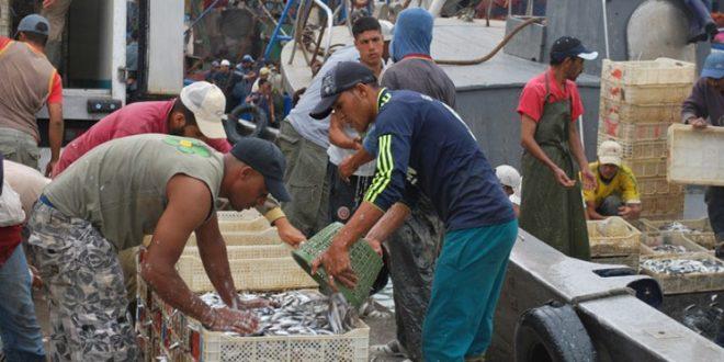 La pêche côtière rapporte au Maroc a généré 6,85 milliards de DH en 2016