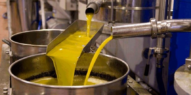 La production d'huile d'olive en Tunisie a chuté d'un tiers