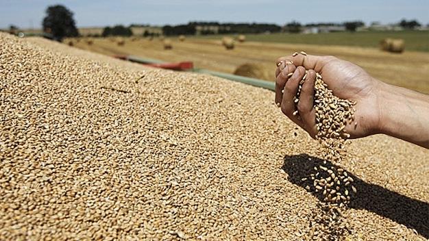 Le Maroc va importer un million de tonnes de blé en 2017