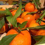 Les agriculteurs Fous furieux contre les bas prix de la clémentine