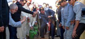 Maroc-Agriculture: Lancement à Tiznit de la plantation de 400 HA d'oliviers