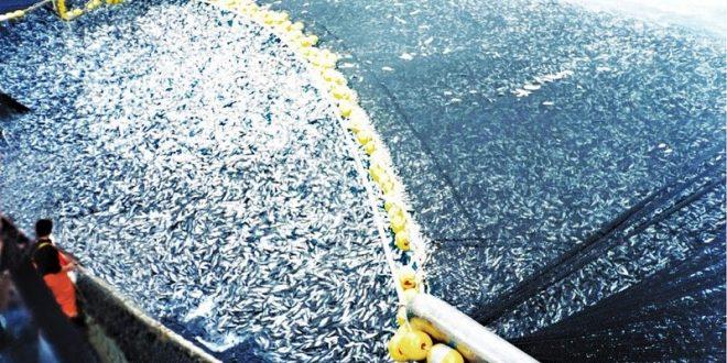 L'UE et les pays tiers de la rive sud s'engagent à sauver les poissons en Méditerranée