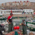 Al-Hoceima : Les pêcheurs se plaignent des dauphins noirs qui abîment leurs filets
