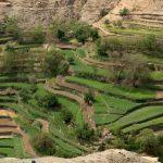 Les plantations arboricoles en progression dans la région Al Hoceima