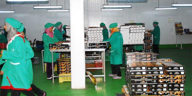 Le Maroc, premier importateur de dattes tunisiennes
