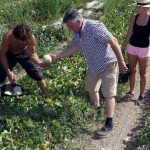 La faible demande et la concurrence mettent à mal la filière du melon en Espagne