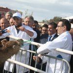 Maroc/Elevage : L'ONSSA compte externaliser la gestion de la traçabilité du bétail