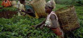 Le Maroc parmi les cinq champions de l'agriculture en Afrique