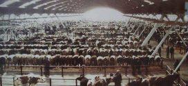 La région de Doukkala aura bientôt son marché aux bestiaux à Sidi Bennour