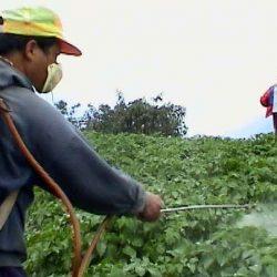 Pesticides : Le thé emballé au Maroc interdit d'entrée en Union européenne