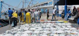 Maroc-Pêche : Les débarquements de la flotte côtière en baisse de 4% fin mars