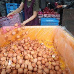 Les Éleveurs de volaille tunisiens refusent l'importation des œufs à éclore sous aucun prétexte