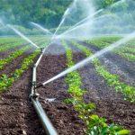 Exonération des petits agriculteurs du Loukkos de la redevance du minimum de consommation de l'eau d'irrigation
