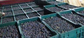 Les exportateurs espagnols d'olives noires perdent des parts du marché américain