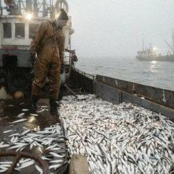 Bruxelles annonce ce vendredi la conclusion du nouvel accord de pêche Maroc-UE