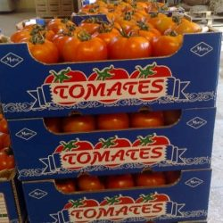 Bilan négatif de la campagne marocaine de production et d'exportation des tomates