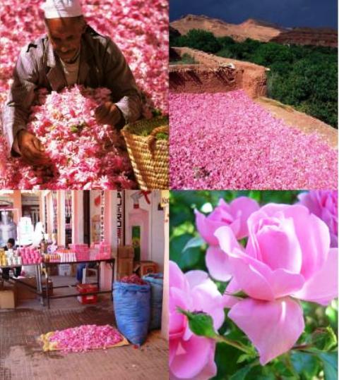 Le 57ème salon international de la rose à parfum, du 25 au 28 avril à Kelâat Mgouna