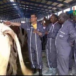 Nouvelle formation dans l'élevage par insémination artificielle au Mali