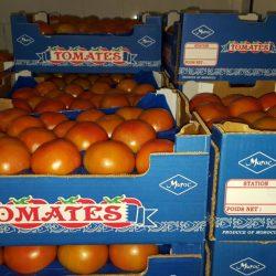 Douze lots de tomates marocaines infectées refoulés de Saint-Pétersbourg en 2019