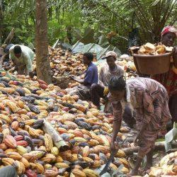 BAD-Rapport : La Côte d'Ivoire tire 15% de son PIB du cacao