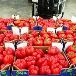 Le Maroc a exporté 64000 tonnes de poivrons vers l'Espagne en 2019