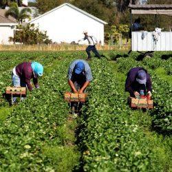 Régularisation massive en Italie des travailleurs étrangers dont près de 9.000 Marocains