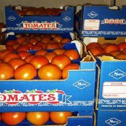Les exportations marocaines de tomates ont la coté sur les marchés de l'UE