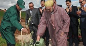 agriculture-olivier