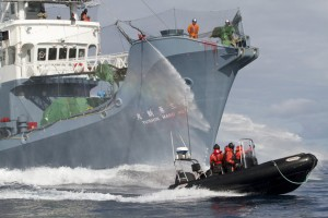 japon-chasse-a-la-baleine