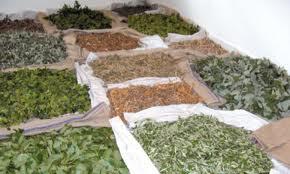 Agriculture : L'avenir de la filière des PAM en discussion à Marrakech