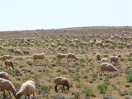 elevage-bétail-fièvre aphteuse