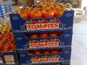Maroc-UE-Tomates-export
