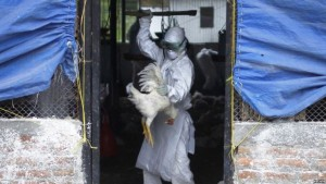 Burkina-Grippe-Aviaire