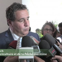 Maroc-Céréales : Surtaxation du blé tendre importé au-delà d'octobre