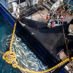 Pêche-Thon : Un nouvel accord entre l'UE et le Gabon pour une contrepartie de 26 millions d'euros