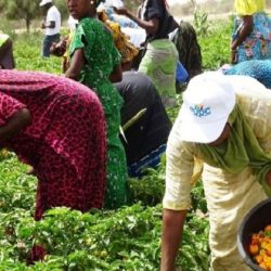 Le Gabon immatricule ses agriculteurs