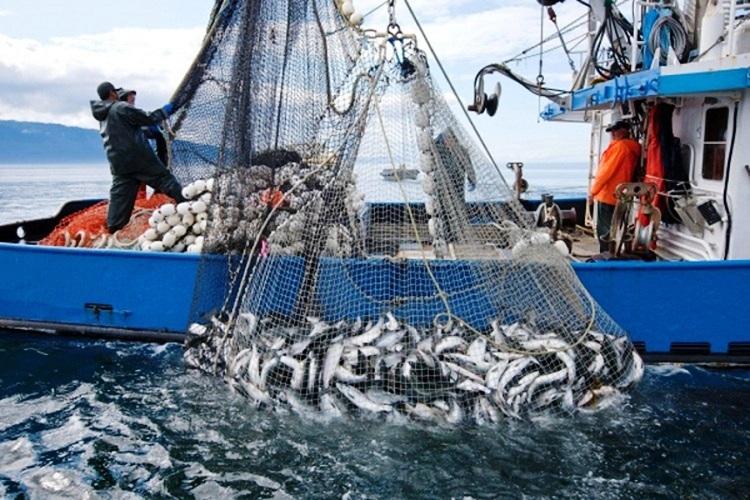CGPM-FAO-Maroc : Accord de coopération dans le domaine des sciences de la mer et de la recherche halieutique