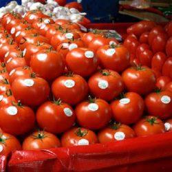 UE-Agriculture : La tomate espagnole perd des parts du marché européen